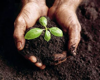 القهوة مفعول سحري للنباتات d8aad8b3d985d98ad8af.jpg