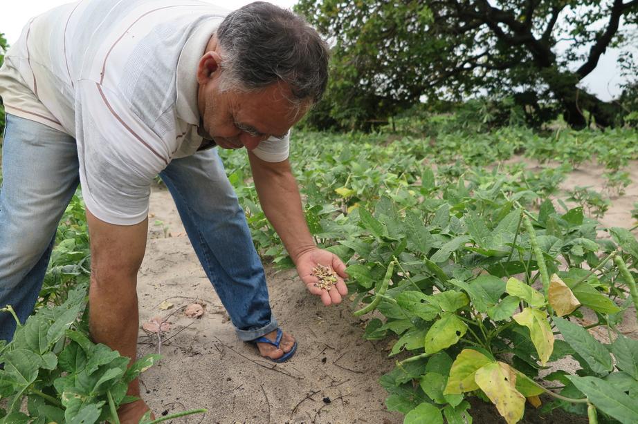 com-chuvas-producao-agricola-no-ce-cresce-193