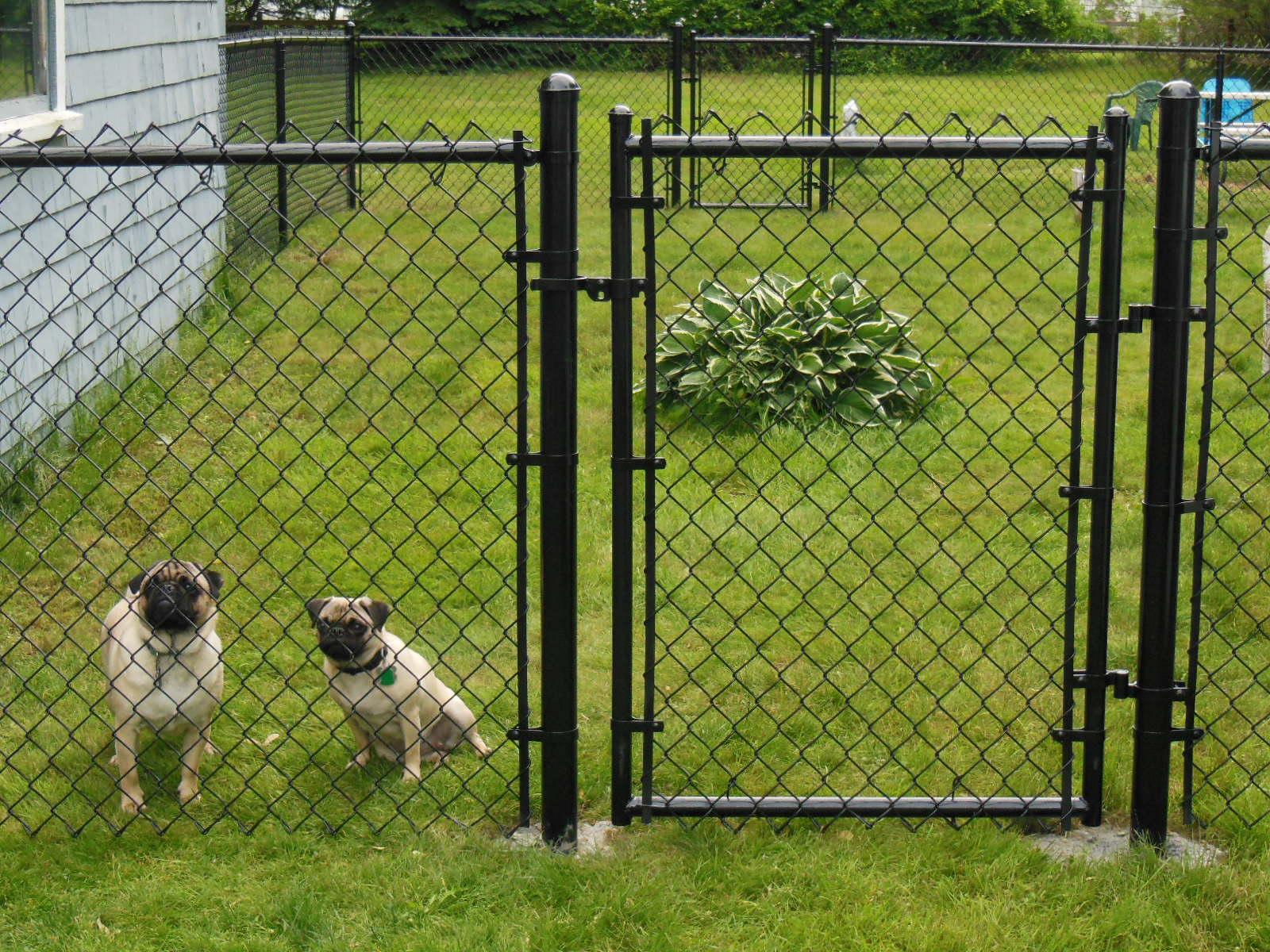 Secrets Of A Vet Tech The Pet Parent Professor Dog On
