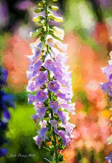 Purple delphinium art print