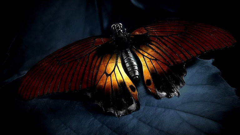 Butterfly HD Wallpaper 6