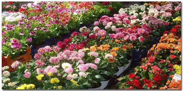 Πανελλήνιος Διαγωνισμός Ανθοδετικής με 300.000 λουλούδια στο 1ο Φεστιβάλ Λουλουδιών Καλαμάτας