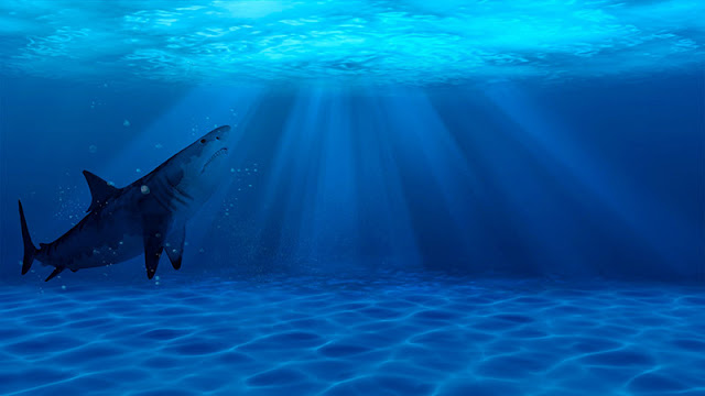 Sea Shark 1080p Wallpaper Engine
