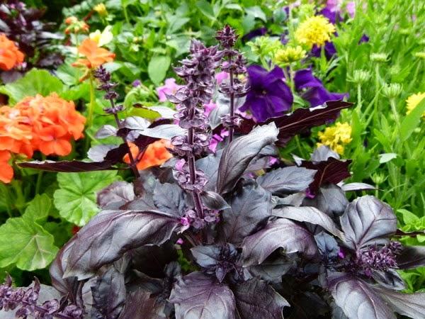 flores e jardins plantas jardinagem e paisagismo santo