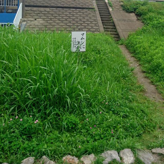 多摩川サイクリングロード マムシに注意