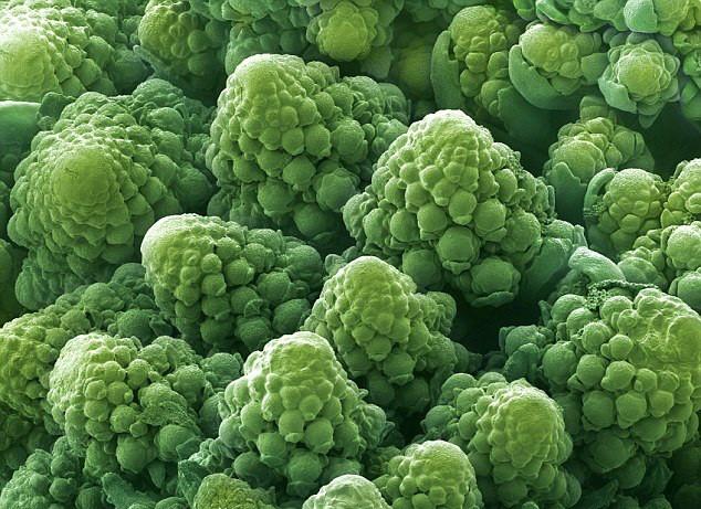 كعالم آخر مستقلٍ بذاته تحت الميكروسكوب cauliflower.jpg