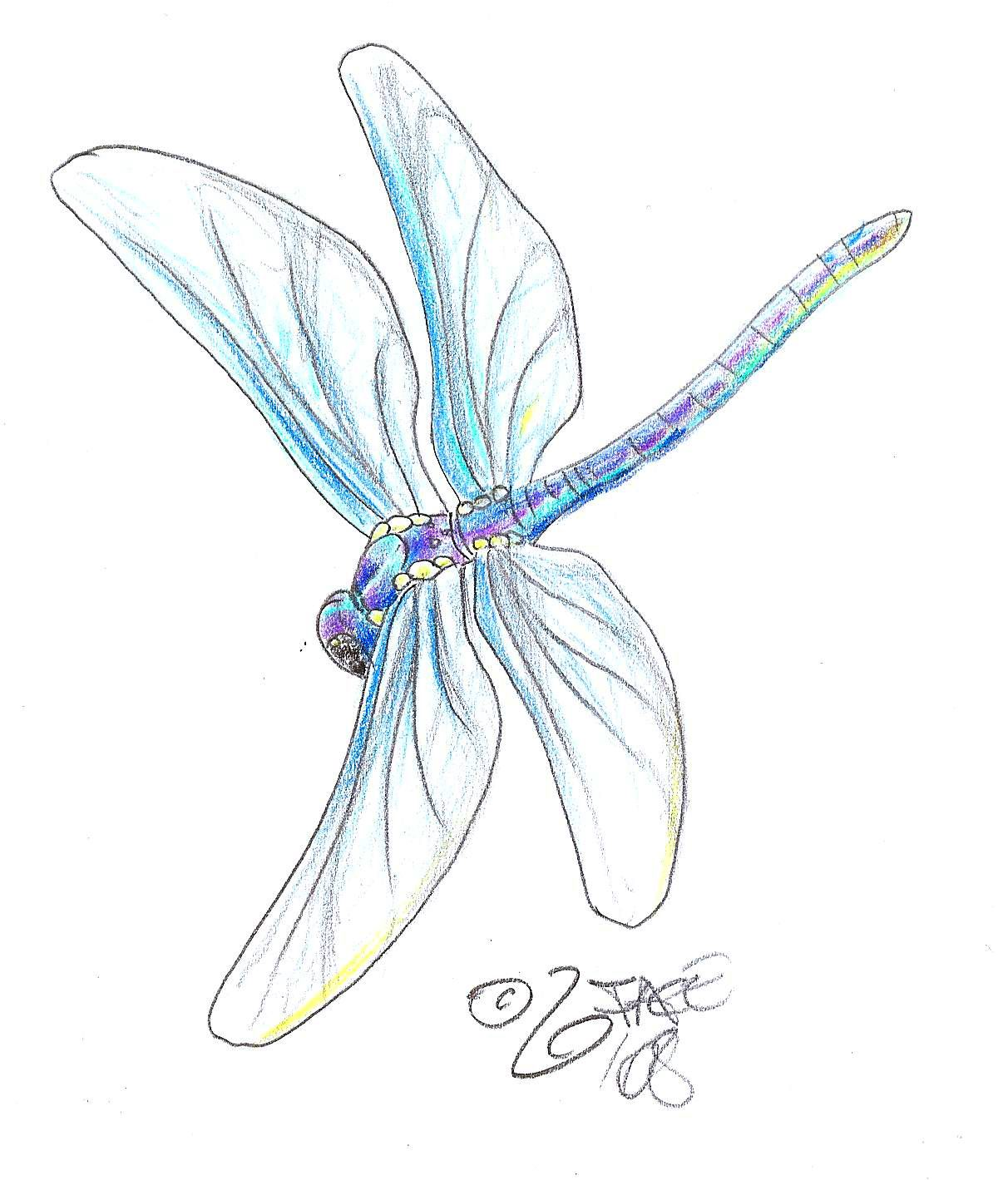Dragonfly Tattoo The Most Popular Tattoo Design For Women