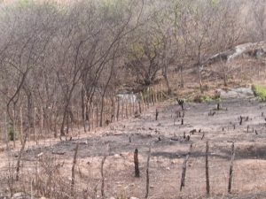 Queima de roçado: agricultor morre queimado ao tentar preparar solo para plantações
