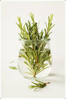 Şifalı Bitkiler 8