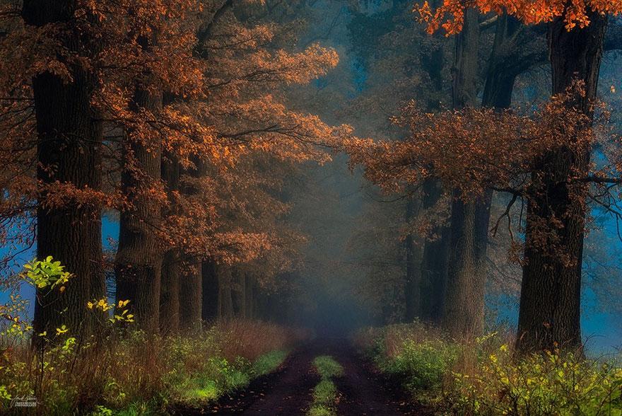 omorfos-kosmos.gr - Σαν όνειρο - Φθινοπωρινά δάση από την Τσεχία (Εικόνες)
