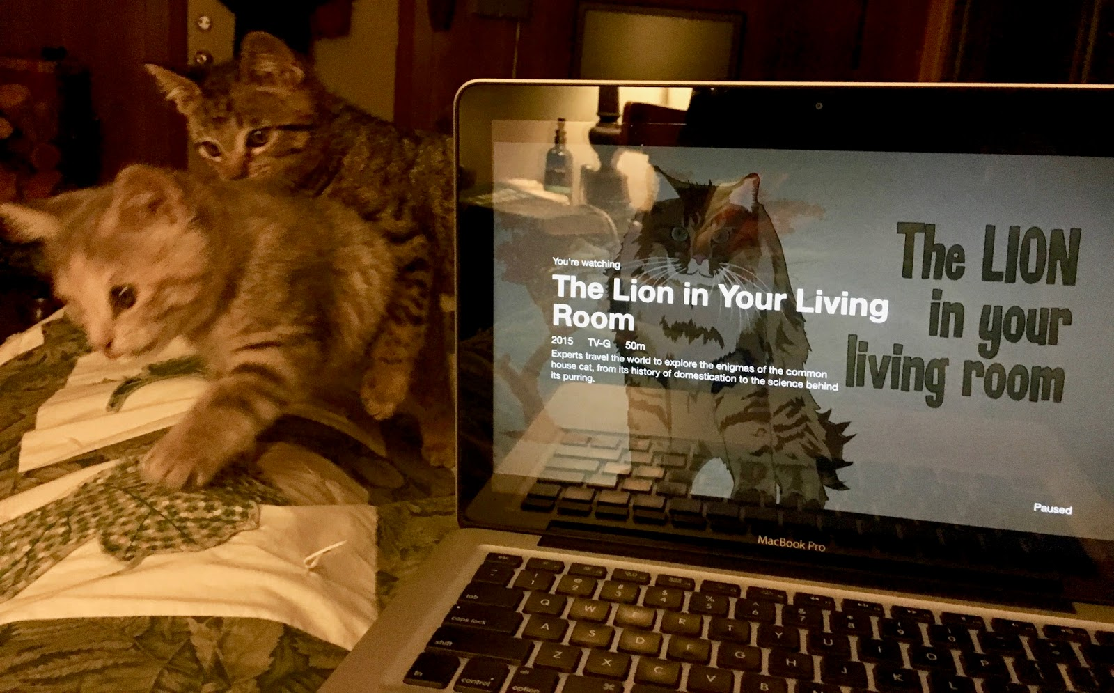 Life less ordinary currently november for The lion in the living room netflix