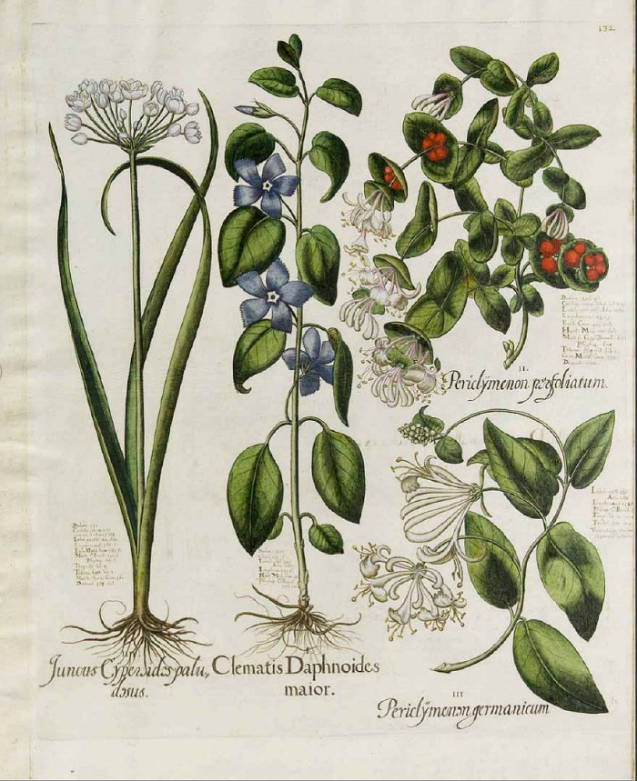 Láminas botánicas y fotografías de plantas de uso libre - Guia de jardin