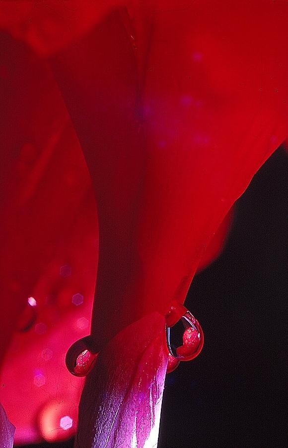 Found Slides: Shades of Red 04