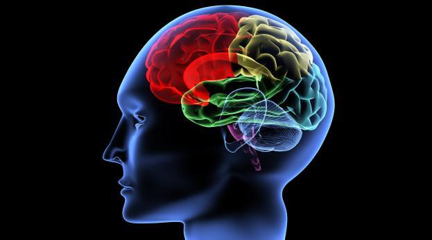 Cérebro continua crescendo em adultos
