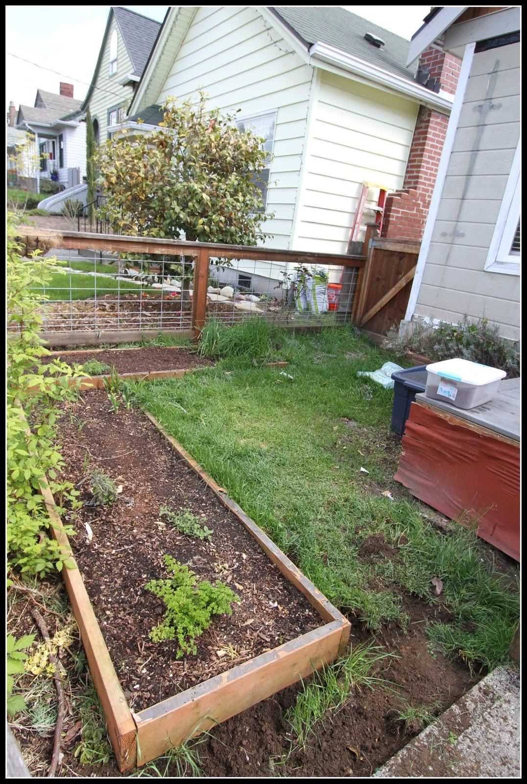 Desperate Gardener: Before And After Garden Shots
