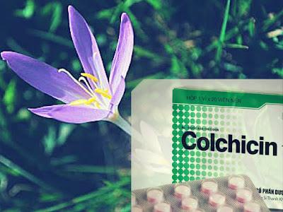 Những lưu ý khi sử dụng Colchicin điều trị bệnh gút