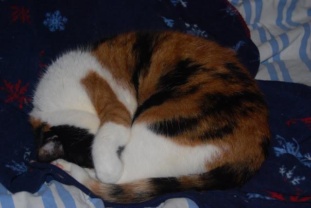 pubm the cat