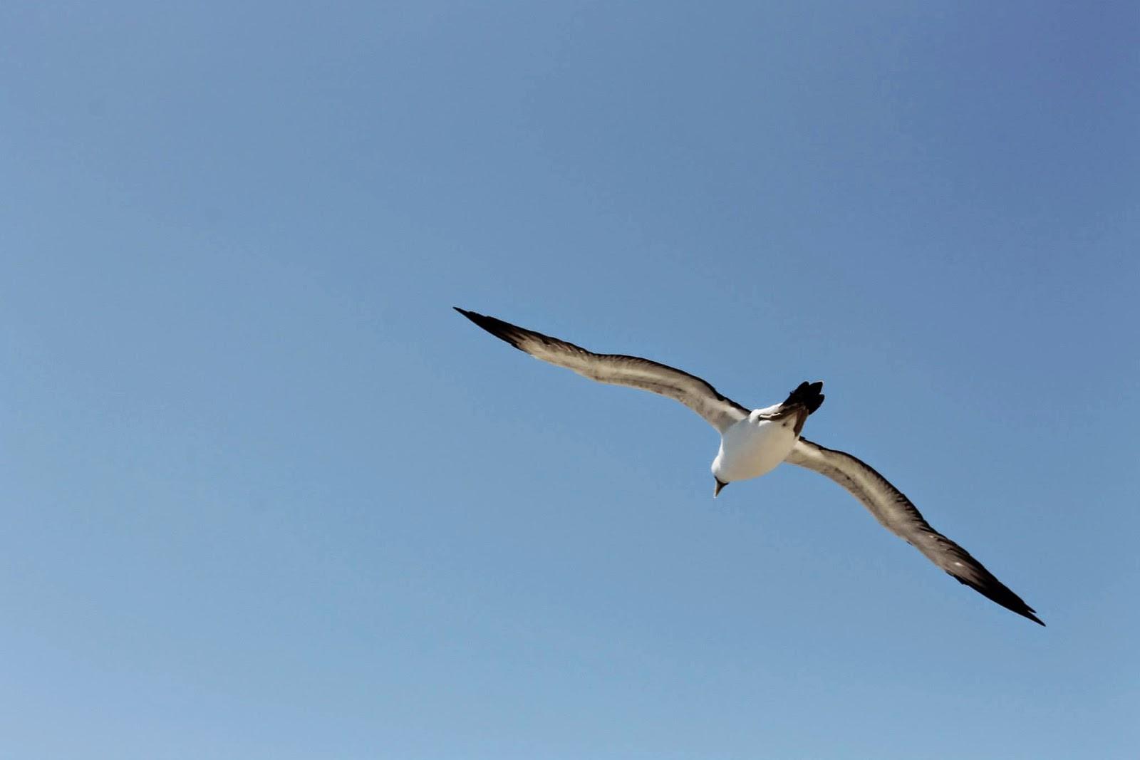 birds brazil bahia abrolhos