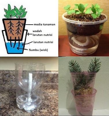 cara menanam hidroponik di rumah dengan teknik sumbu wick