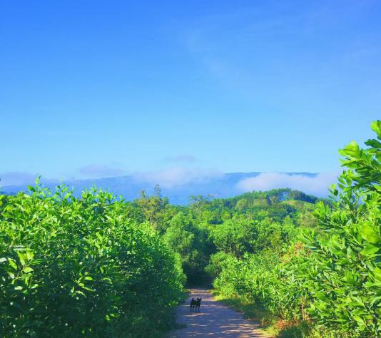 làng Vân Phong, Đà Nẵng