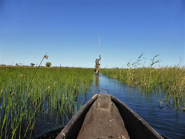 Mokoro en el Delta del Okawango