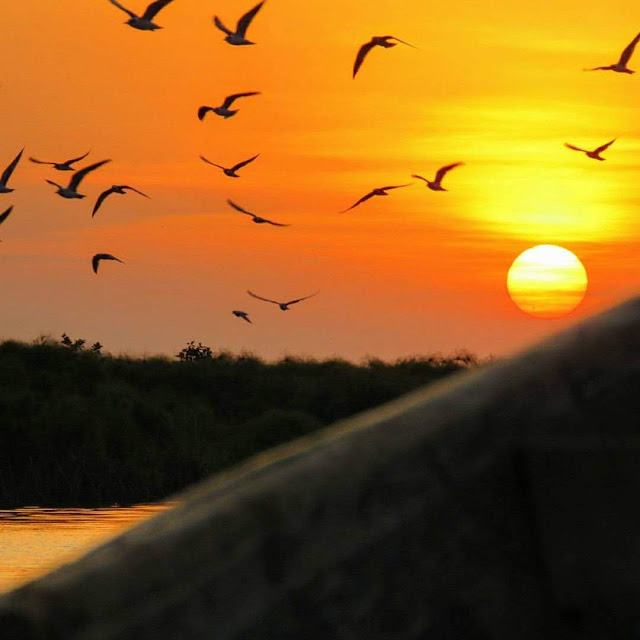 Birds at sunset over Lake Victoria in Entebbe, Uganda