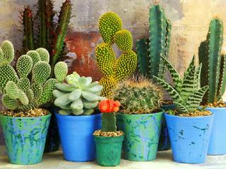 menanam-kaktus-dan-sukulen.jpg