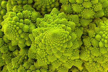 自然界はシンプルな法則で成り立っている?フラクタルとは?【o】 幾何学