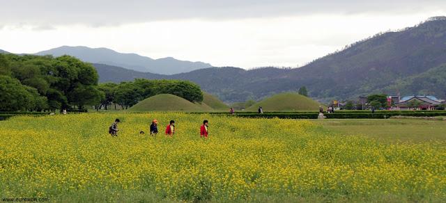 Flores amarillas de colza en Gyeongju