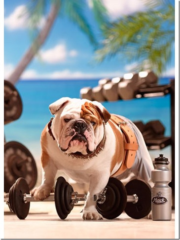 Funny Bulldog Only New Photographs Funny And Cute Animals