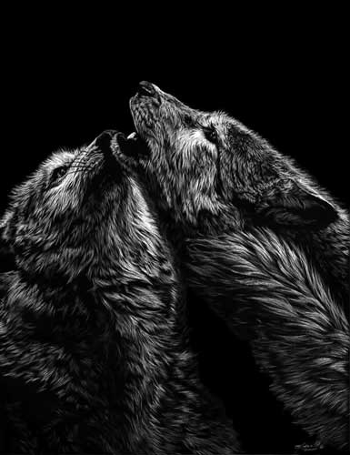 16-Wolfs-Allan-Ace-Adams-Scratchboard-Drawings-of-Wild-Animals-www-designstack-co