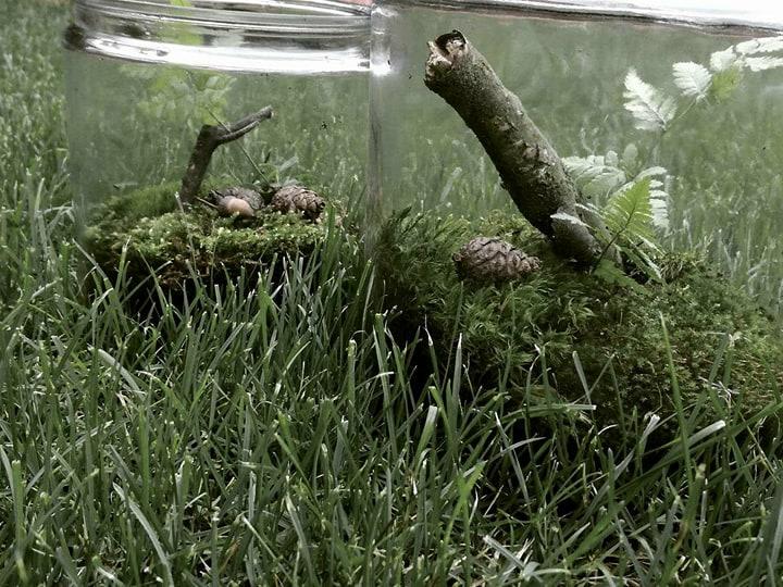 Jak stworzyć las w szkle - DIY