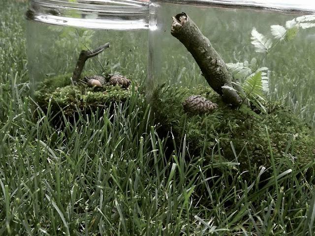 jak samemu zrobić las w słoiku