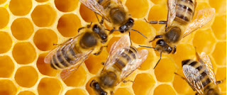 Permalink to The Buzz Most Bees … Bee Amend Certification Coming Soon