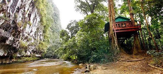Tree House Thailand