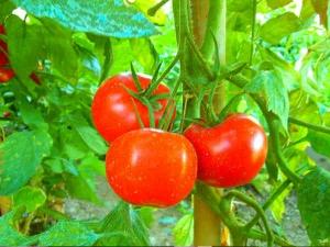 gardening ideas in malayalam