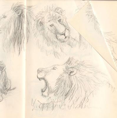 sketches lion croquis illustration