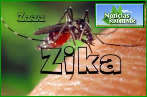 [Imagem: Surto-do-Zika-V%25C3%25ADrus-Ligado-%25C...icados.jpg]