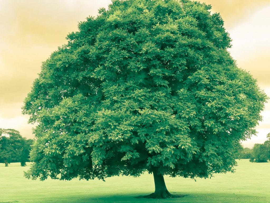 Big Tree Wallpapers hd