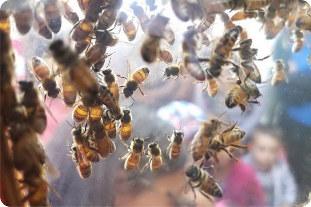 libri per bambini piccoli sulle api
