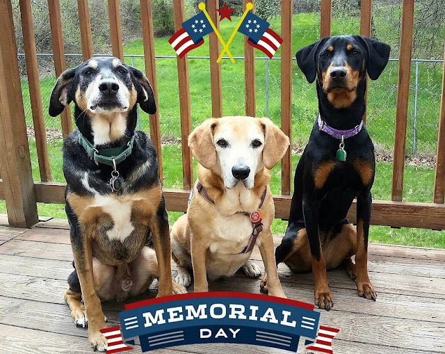 The Lapdogs wish everyone a safe and Happy Memorial Day. Thank you to all those who have served, both human and K9. #MemorialDay ©LapdogCreations