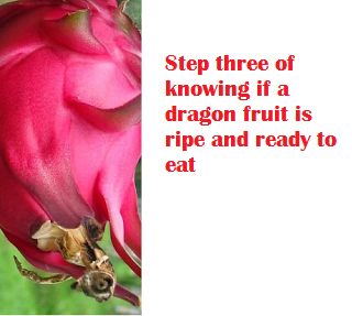 Step three of knowing if a dragon fruit is ripe and ready to eat
