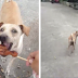 Stray Dog Begs For Food But Won't Eat It. So They Follow Her With A Camera.