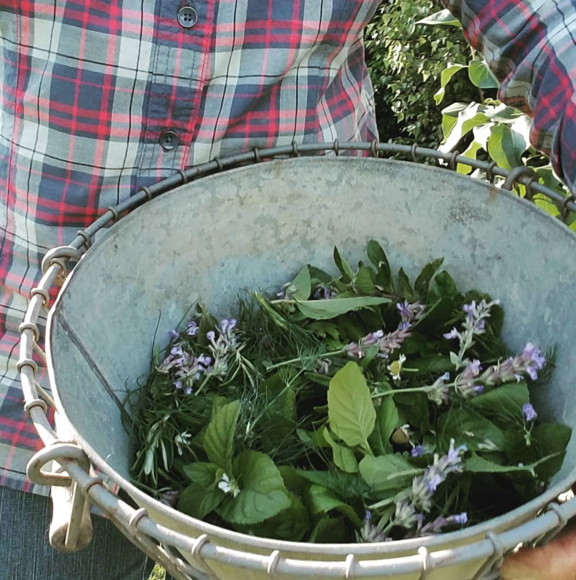 Common Herbs and their Health Benefits for You and your Chickens