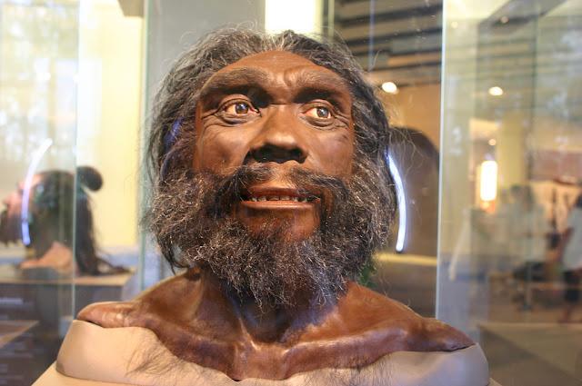Heidelbergensis Homo