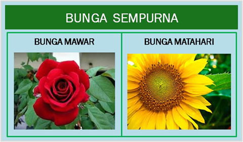 Pengertian Bunga Lengkap Dan Tidak Lengkap Jaini Loen