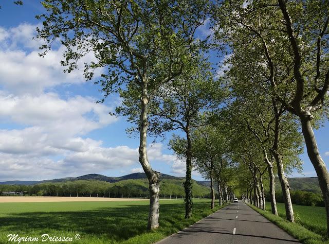 Route conduisant à la vallée du Sant Montagne Noire Tarn