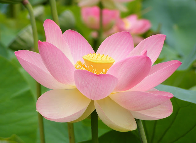 "<img src=""flor-de-bach.jpg"" alt=""flor de bach para calmar la ansiedad"">"