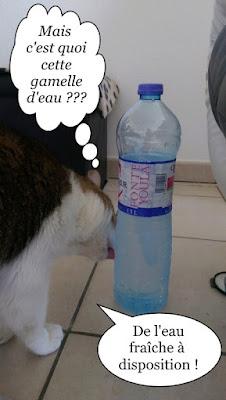 Quand un chat veut boire à la bouteille.