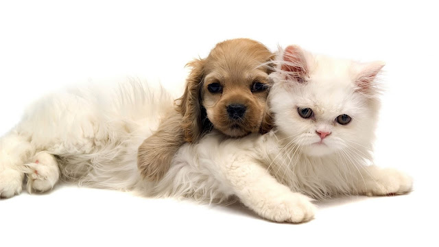 Cat and Dog Wallpaper 2